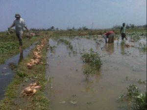 Banjir, Petani Terancam Gagal Panen