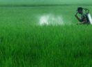 Tips Cara Menghitung Dosis Pestisida yang Tepat Agar Hama dan Penyakit Mati Seketika