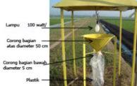 Manfaat Lampu Perangkap Hama (Light Trap), Petani Wajib Tahu Ini