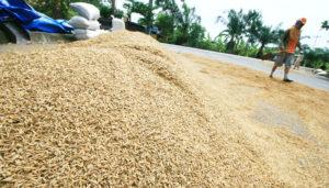 Strategi Pemerintah Dongkrak Hasil Pertanian pada 2017