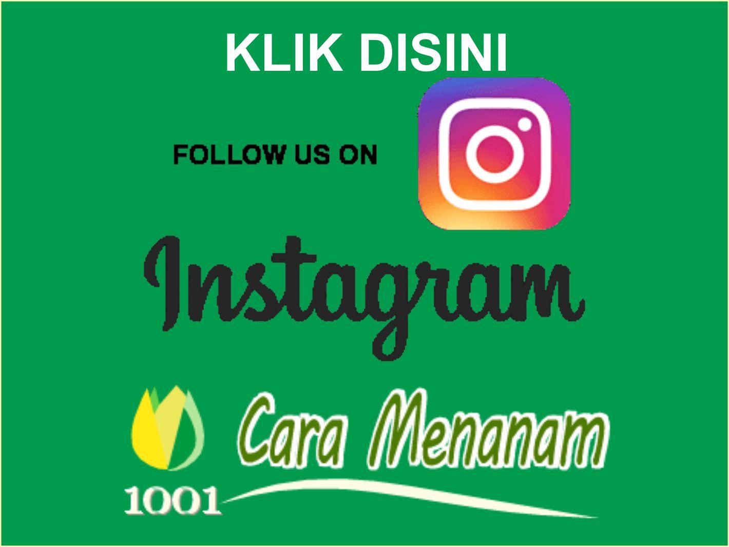 Instagram 1001 Cara Menanam
