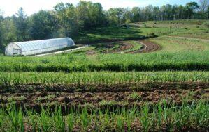 Beberapa Cara Menjadi Petani Sukses yang Harus Anda Ketahui